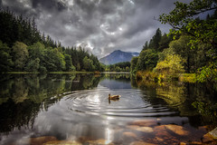 Ripples (Katherine Fotheringham) Tags: duck scotland glencoe lochan ripples reflections trees clouds