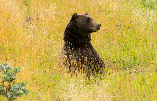 Thumbnail from Alaska Wildlife Conservation Center