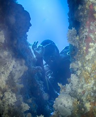 Stephane Oxygene plongee (juredel) Tags: mrou juredel olympus corb oxygene plonge diving scull scubadiving scuba wallpaper la vacca lavacca cerbicales ilescerbicales