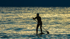 Alone (RoosterMan64) Tags: australia avalon nsw northernbeaches paddleboarder sunrise