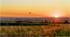 Sommermorgen (Peter Daum 69) Tags: sommermorgen sommer sunset sunrise sonnenaufgang licht light landschaft natur landscape nature scenery summer morning dream color farbe canon 6d eos