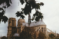 IMG_20160828_0031.jpg (Mjooolka) Tags: paris france europe travel analog film french seine architecture vintage park tuilerie louvre piramide toureiffel trees nature light october street cityscape bridge notredame cemetery perelachaise crow animal jimmorrison bande place buoildings zenit122k autumn wanderlust