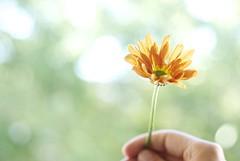 fall #1 (maria_logak) Tags: flower fall macro macrolens nikon september beautiful dof depthoffield bokeh