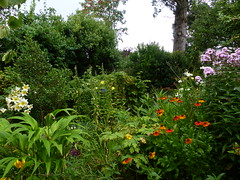 P1110873 (jrcollman) Tags: agapanthus leucanthemumxsuperbum plants splant iplant aplant irisconfusa liliumlesotho oenothera heleniumsahinsearly oplant pplant phloxxarendsiipingpong hplant liliumleichtlinii sorbusaucuparia 21beechwoodgarden archived lplant dplant diasciapersonata lobeliafanpurple