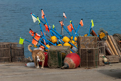 Aparejos de pesca (Oscar F. Hevia) Tags: perro pescadores colores color nasa nasas boyas balizaflotante puerto artesdepesca banderas aparejos mar agua dog fishermen colors traps buoys floatingbeacon harbor fishinggear tackle sea water flags2016 astrurias asturies espaa baugues gozn lluanco luanco principadodeasturias spain verano flag flags 2016