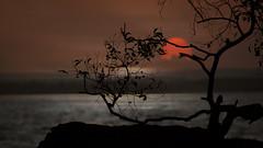 Sunset (Nacif Marai) Tags: sunset sea water seascape tree trees travel contrast abstract indonesia illustration beautiful rocks sky orange
