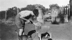 Feeding pet lamb - Trundle, NSW (State Library of New South Wales collection) Tags: statelibraryofnewsouthwales