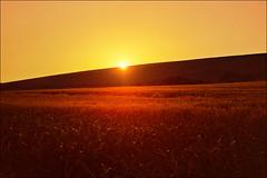 Shining (Katarina 2353) Tags: shining summer sunset vojvodina srem srbija serbia europe katarina2353 katarinastefanovic