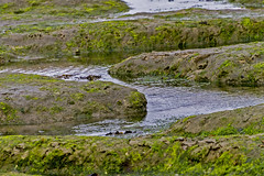 Mud channels or sleeping seals (skipnclick) Tags: mud muddy wate seaweed chichester harbour