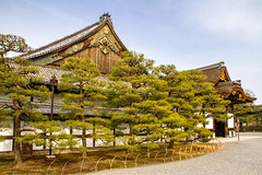 Nijo Castle (Gigin - NoDigital) Tags: trees plant castle nature japan buildings kyoto geography locations kyotoprefecture