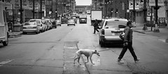 Ok, but for the record, I do not like Wet Paws (ncarling) Tags: urban chicago streetphotography 2012 d90 2470mm28