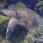 """BIO 245: Ecology of Ecuador<a href=""""http://farm9.static.flickr.com/8018/7142162263_88e990471d_o.jpg"""" title=""""High res"""">∝</a>"""
