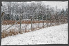 A Simple Winter Scene [Explored June 21st #306] (Darren LoPrinzi) Tags: new winter snow canon fence countryside interestingness interesting nj explore jersey blizzard explored i500 inexplore canon7d