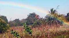 Victoria Falls_2012 05 24_1743 (HBarrison) Tags: africa hbarrison harveybarrison tauck victoriafalls zimbabwe zambeziriver mosioatunya