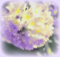 Soft purple yellow... (May`s Poetry) Tags: pink flowers light sun plant beauty garden square petals soft day bokeh pastel smooth shapes shades pale rays bun silky lightpurple