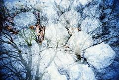 b_IMG_0018 (spoeker) Tags: winter holland netherlands analog 35mm lomo lca xpro lomography slide dia double multipleexposure analogue mx kb valkenburg niederlande doppelbelichtung mehrfachbelichtung