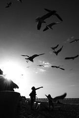 """I believe... (Mister Blur) Tags: sea blackandwhite bw seagulls blancoynegro beach girl silhouette set that puerto atardecer mar flying sand nikon sundown you dusk free playa things arena believe silueta gaviotas ocaso progreso volando d60 femenina mrblur yucatán i méxico rocoeno"
