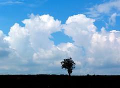 kiss me quick , clouds (nannyjean35) Tags: blue sky tree field clouds fence kiss hedge