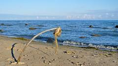 Fish Skeleton Hanging at Beach