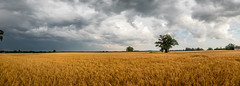 Summers Thunder Storm (Neal_T) Tags: clouds countryside fuji fujifilm lightning norfolk panorama sky stormclouds watton wayland xt10 crop farming field storm thompson village norwich uk