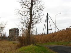 IMG_0980 (Gino Chnard) Tags: arbre automne montral parcnaturedelledelavisitation pont ville laval quebec canada