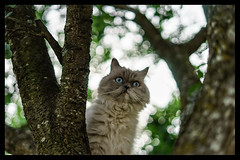 look at this (Ro Ho) Tags: 50mm funny nature landscape bokeh animal animals cat deutschland germany natur landschaft ff cats sony pet a7 vf alpha7 a72 catmoments