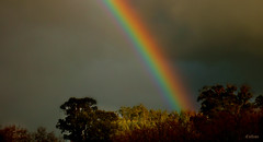 Arco da Vella (Franco DAlbao) Tags: francodalbao dalbao lumix arcodavella arcoiris rainbow cielo sky bosque wood