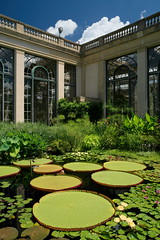 Longwood Water Lilies (Tim Devine Photography) Tags: sonya7rii ilce7rm2 smcpk28mmf35 smcpentax28mmf35k longwoodgardens conservatory waterlilies pennsylvania garden
