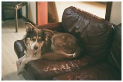 Brownie (Patrick J. Negwer) Tags: ecuador pichincha pintag pahuma reserva cascada rio agua verde sol cielo perro perros gusano plantas naturaleza