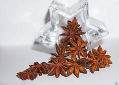 Star seed ~ Sterrenzaad (in explore) (Swaentje5) Tags: staranise stars seed steranijs aromatic plant spice specerij anijs macromondays macro geurig crystal kristal ster sterren star illiciumverum