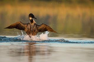 Splashdance!