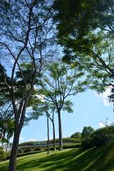 Bosque no Solo Sagrado (marcusviniciusdelimaoliveira) Tags: rvores troncos tronco rvore jardim bosque gramado solosagrado