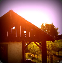 IMG_4535 (fejesb) Tags: summer