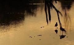 4 teros (Litswds) Tags: teros rio mar sea river forest old viejo bosque ventana window argentina arbol verde nature green naraleza naturaleza vida viva vivir cielo flickr reljejo camino
