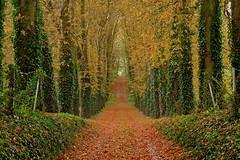 Prmices d'automne 1 (version horizontale) (JDAMI) Tags: automne feuillesmortes chutedesfeuilles jaune rouge alle arbres verdure contre 80 somme picardie france nikon d600 tamron 2470