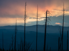 Contrasts (Zen Captures) Tags: olympus landscape sunset em5ii olympusomdem5ii outdoor yellowstone zuiko trees summer west outside cloud sky mountwashburn zd omd mountain wyoming natura nature