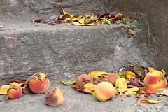 Stone fruit (pburka) Tags: peach fruit fallen rotting rotten steps queens nyc yellow stairs sunnyside