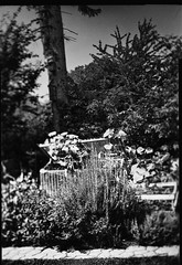 tilt try out 1 (salparadise666) Tags: busch pressman c 2x3 wollensak 101mm tilt f8 125 sec fomapan 100 sheet film caffenol rs nils volkmer germany garden experiment vintge camera analogue