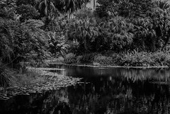 """The Mighty Jungle..."" (Pedro1742) Tags: trees jungle reflections water stream"
