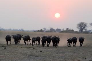 Namibia Dangerous Game Safari - Caprivi Strip 48