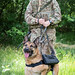 Tracey from 102 Military Working Dogs Sqn