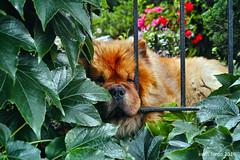 SDIM3650 Kopie (sven_fargo) Tags: dp2 dog hund color city wien vienna sterreich sweet