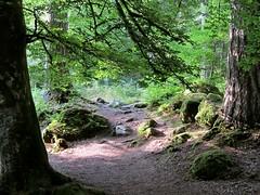 Woodland (Traigh Mhor) Tags: 2016 dunkeld august perthshire scotland hermitage nts nationaltrustscotland