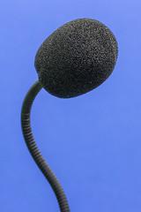 2016-09-11-002-MaMa - MGFK - Microphone - 0010 - C00001sr - W1920 (mair_matthias_1969) Tags: augsburg bayern deutschland de lumix panasonic dmcg7 dmcg70 mft microfourthirds g7 g70 lumixg7 lumixg70 nophotoshop keineschmutzigentricks ohneschmutzigetricks nodirtytricks gvario100300f4056 rschstativschelle roeschstativschelle rschlensringclamp roeschlensringclamp makro zwischenringe macro extensionrings mgfk indoor mikrofon microphone macromondays thefirstletterofmyname