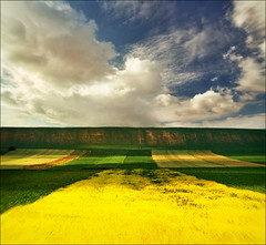 Summer field (Katarina 2353) Tags: landscape summer serbia srbija vojvodina srem katarina2353 katarinastefanovic nikon film
