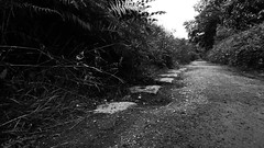 Silkstone Waggonway (dave_attrill) Tags: silkstone waggonway barnsley canal navigation company cawthorne industrial horsedrawn cola coke disused trackbed bridleway old sleepers south yorkshire 1809 2016 barnby basin