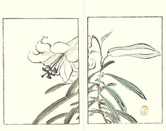 Bamboo lily (Japanese Flower and Bird Art) Tags: flower bamboo lily lilium japonicum liliaceae buncho tani nanga woodblock picture book japan japanese art readercollection