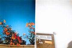 no de pub (BeefySquarms) Tags: dianamini 35mm lomography lomographycamera diana halfframeshots flowers redflowers beautifulflowers postbox post postal pub filmisnotdead filmphotography film photography