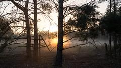 Sonnenaufgang im Wald - Sunrise in the forest-0730 (Holger Losekann) Tags: sonnenaufgang sunrise nebel fog mist bume trees wald forest wood