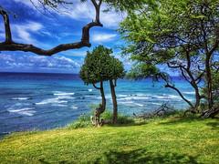 """In My Solitude ..."" (jcc55883) Tags: tree sea sky clouds ocean pacificocean diamondheadroad kuileicliffs hawaii oahu ipad ipadair"